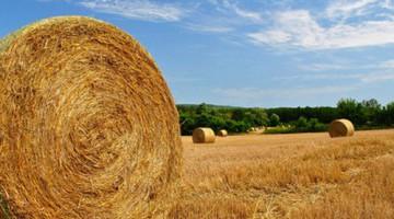 Ajánlatkérés biomassza tüzelésű kazánra